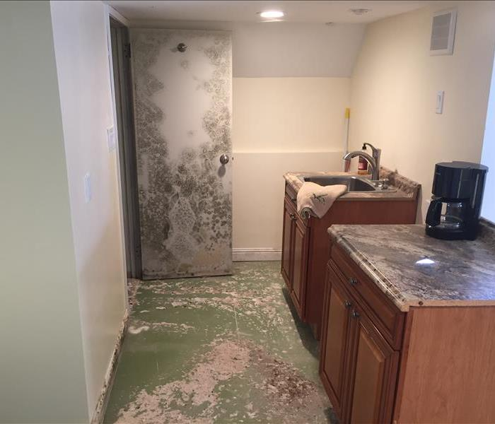 Mold Remediation Santa Barbara Residents:  Follow These Mold Safety Tips If You Suspect Mold